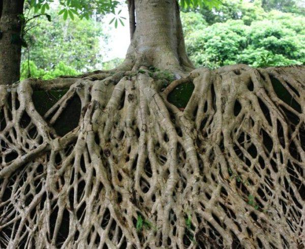 Deep financial roots